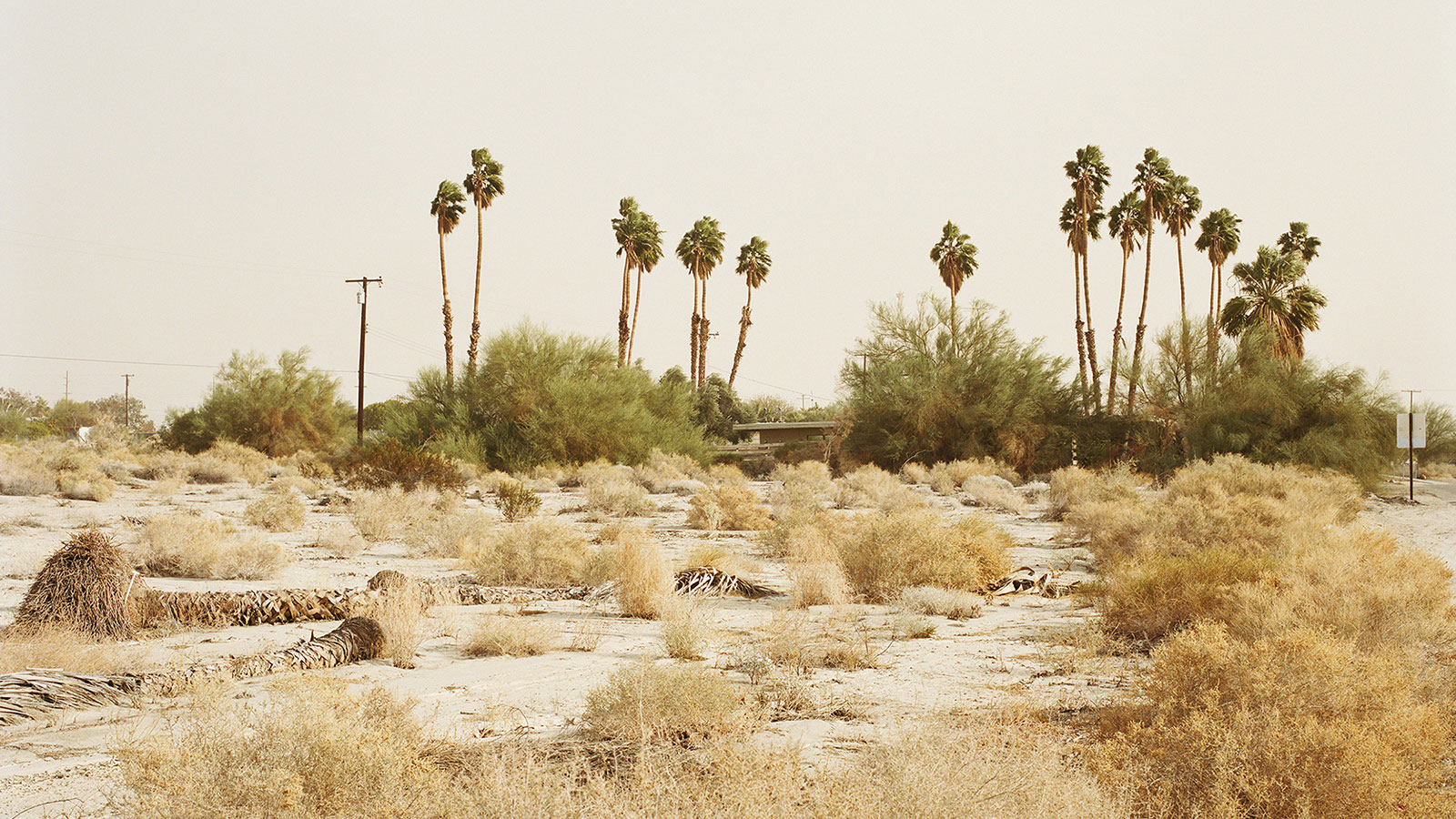 Detail Of: © Ron Jude, Dust Storm W/Palms And House, 2013, From The Series 'Lago'