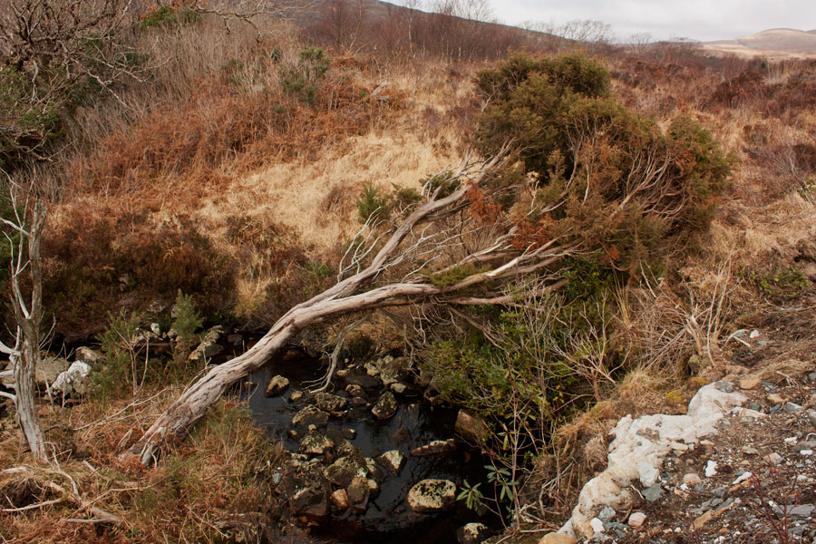 Tree Across A Divide, Glenveagh National Park (County Donegal) © Valentina Culley-Foster